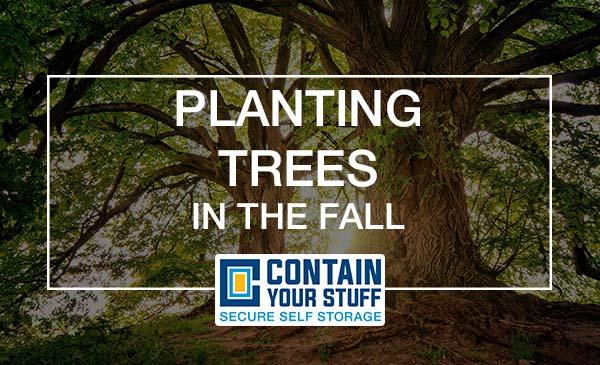 tree, planting, fall